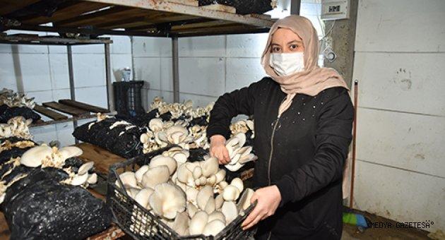 Hobi olarak mantar üretimine başlayan kadın girişimci talebe yetişemiyor