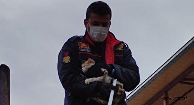 Kahramanmaraş'ta ağaçta mahsur kalan kediyi itfaiye kurtardı