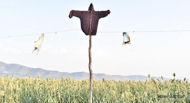 """Kuş yemi """"akdarı""""yı kuşlardan korumak nöbet için tutuyorlar"""